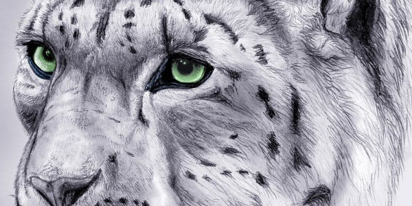 snow-leopard-colour-for-blog