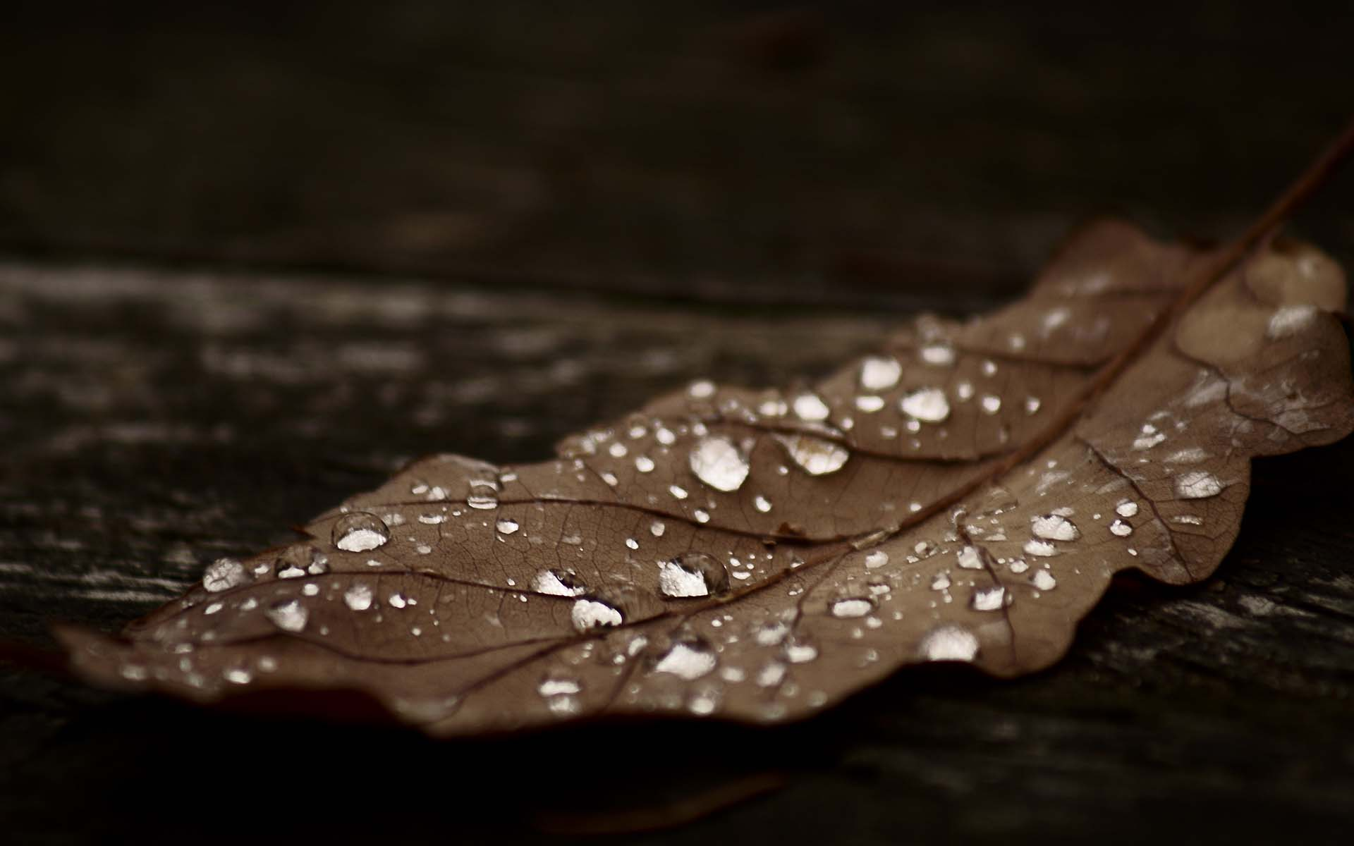 Dark_Autumn_Wallpaper