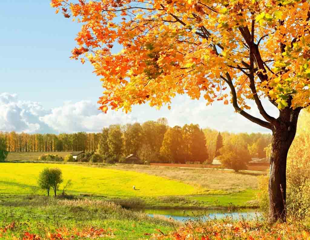free autumn desktop backgrounds wallpaper themescompany
