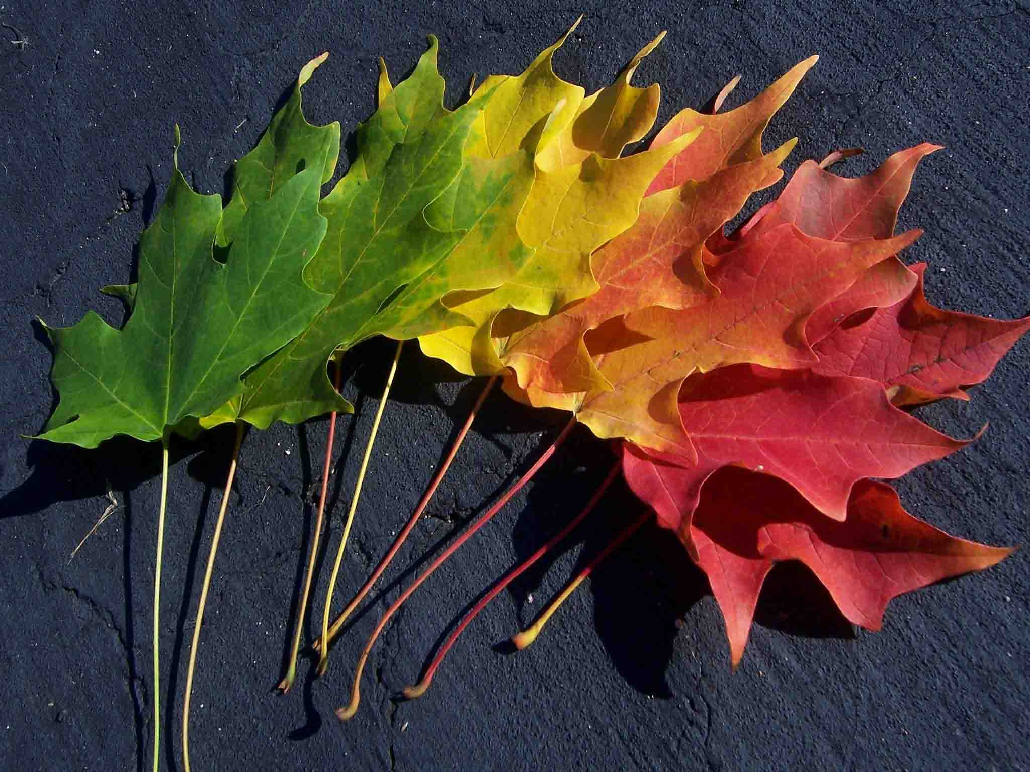Leaf_Rainbow_Wallpaper