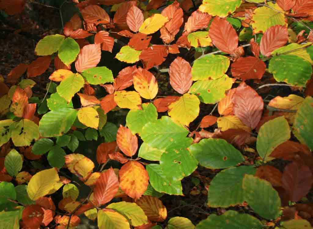 autumn-leaves-001