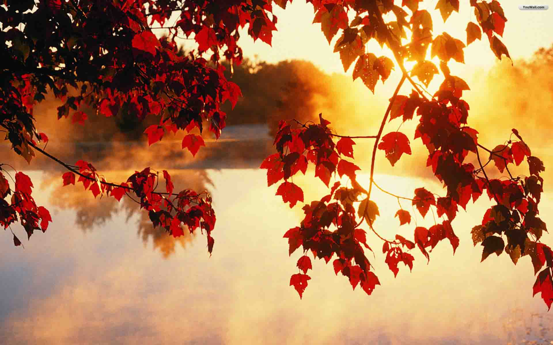 autumn_wallpaper