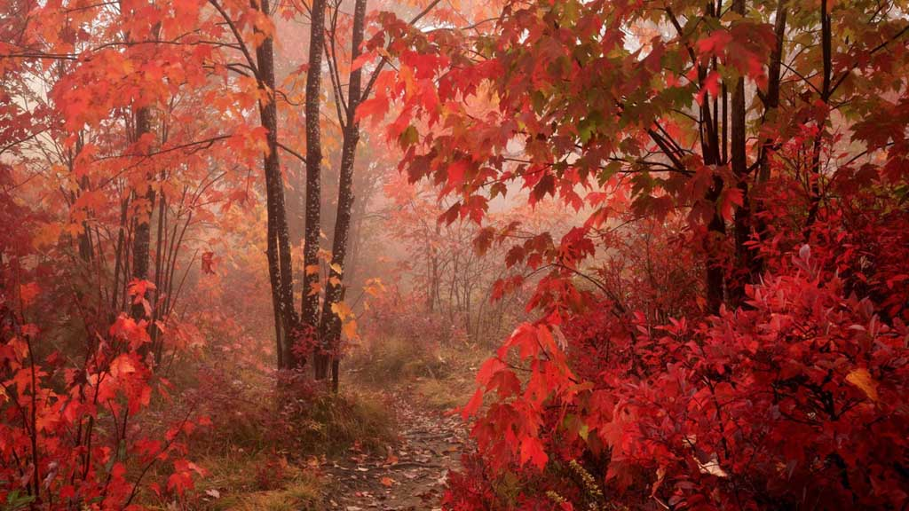 best autumn wallpaper