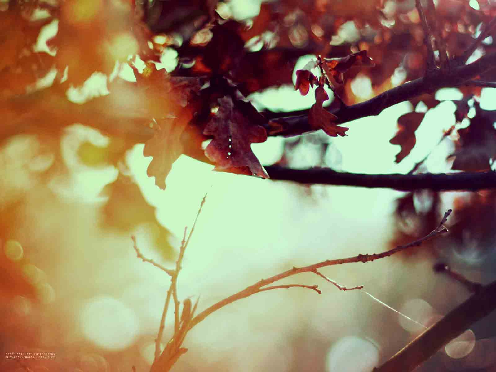 feels_like_autumn_wallpaper