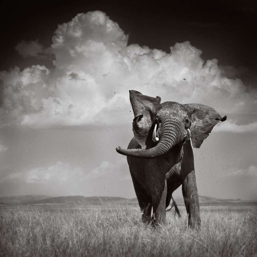 elephants pictures