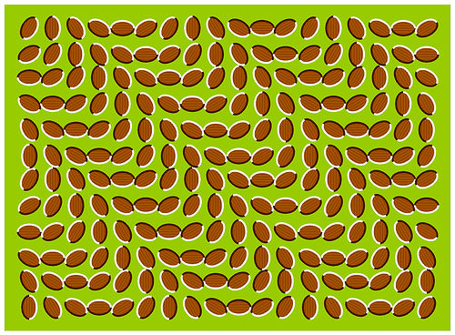 Optical Illusions (35)