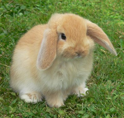 40 Cute Brown Bunny Rabbit