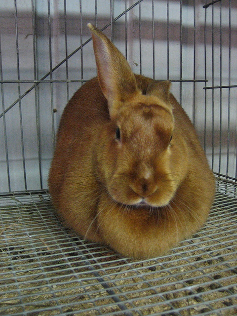 brown bunny rabbit (34)