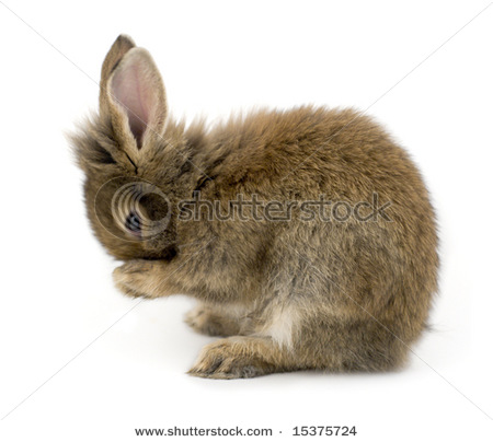 brown bunny rabbit (5)