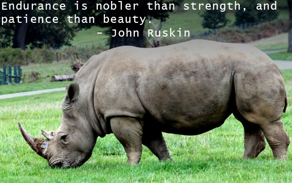 quotes on strength (26)