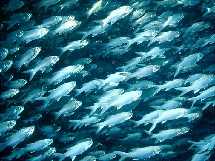 20 plenty fish images themescompany for How many fish are in the ocean