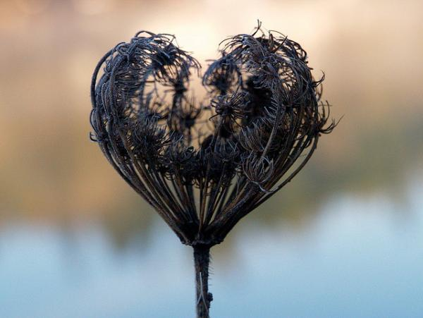 Dried Flower Broken Hearts