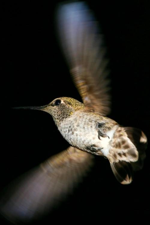 Bird-Wallpaper-for-iPhone-4S