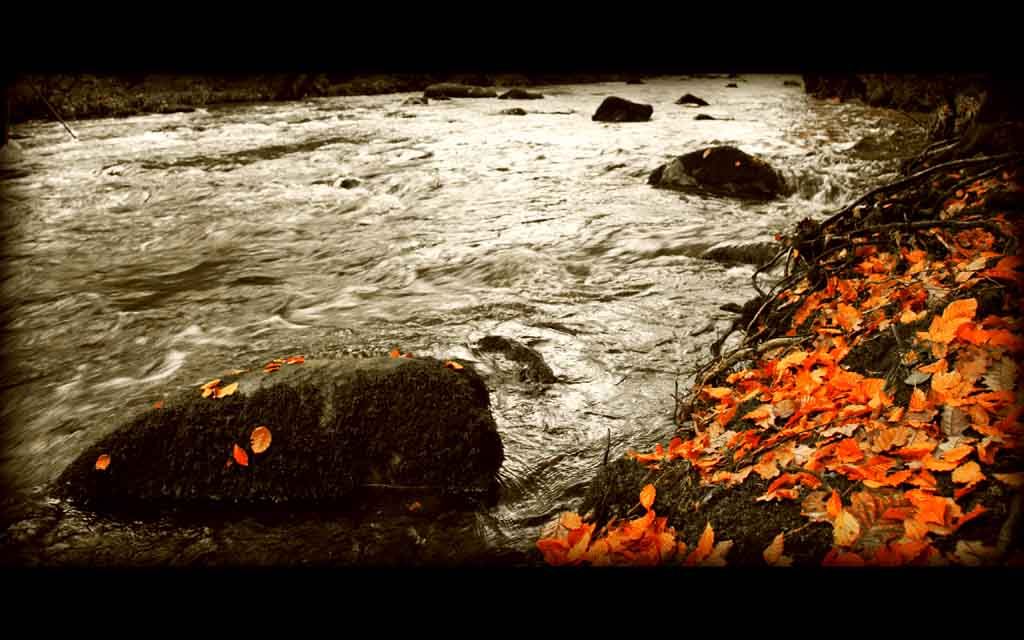 Signs_of_Autumn_Wallpaper