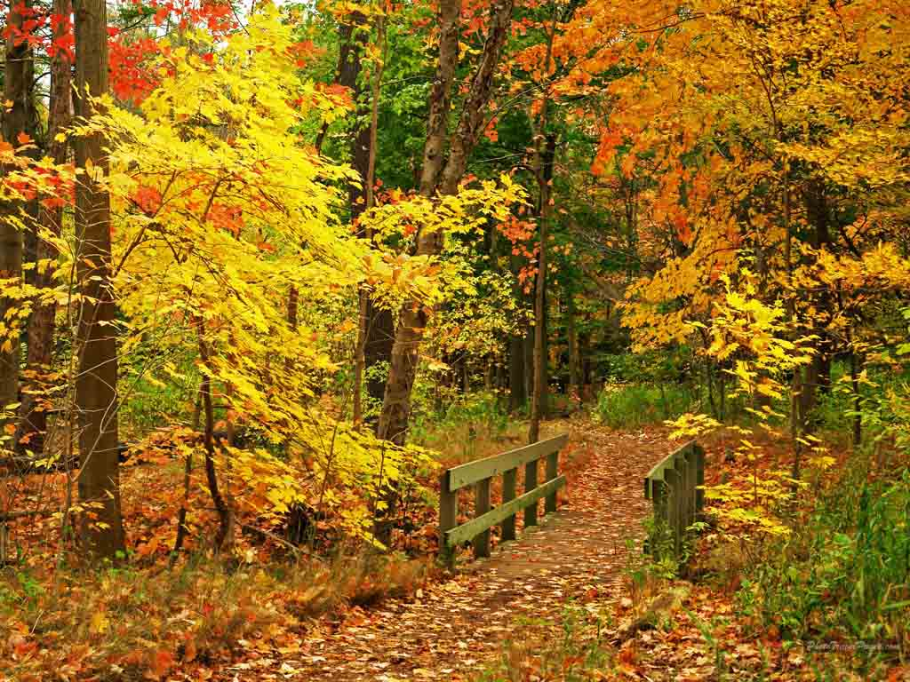 best autumn wallpaper