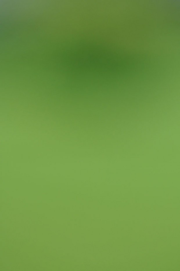 green Wallpaper for iPhone 4S