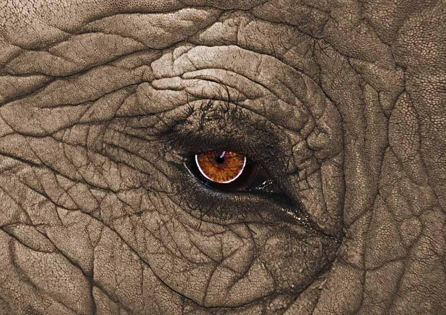 elephants pictures
