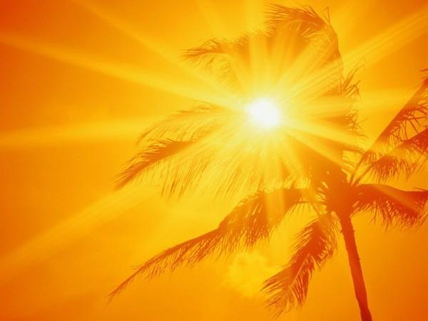 Sun Shine (27)