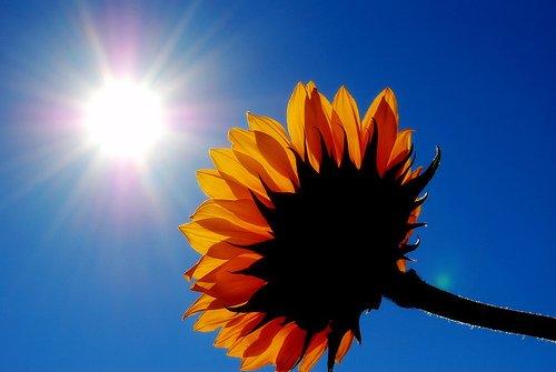 Sun Shine (29)