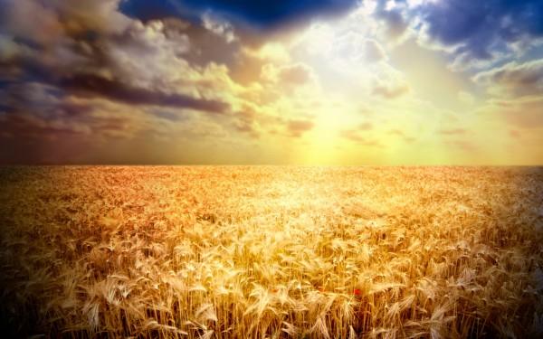 Sun Shine (1)