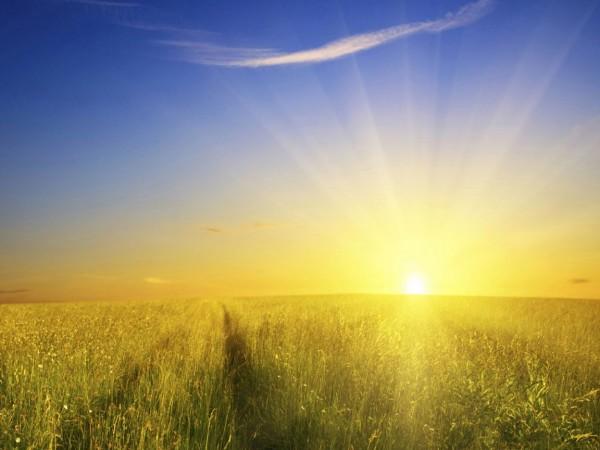 Sun Shine (24)
