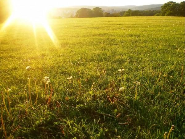 Sun Shine (8)