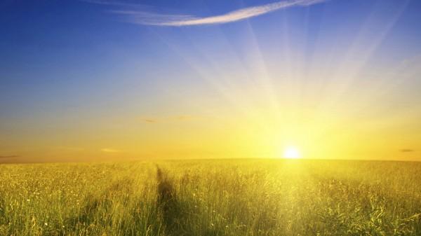 Sun Shine (17)