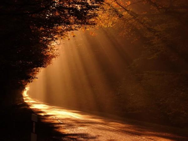 Sun Shine (4)