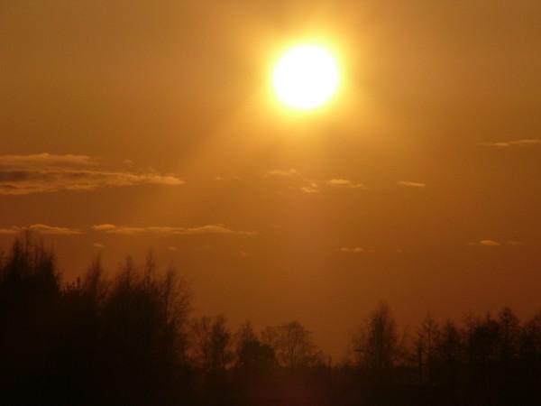 Sun Shine (12)