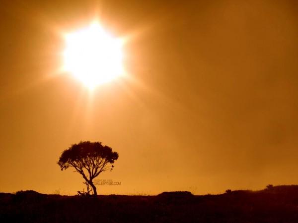 Sun Shine (11)