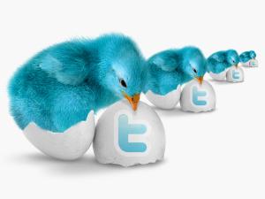 twitter birdie pack